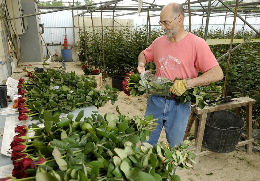 Разведение, выращивание и продажа цветов как бизнес с нуля на даче