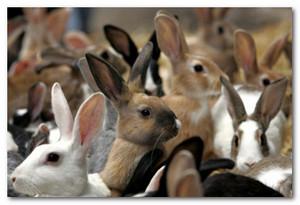 как правильно ухаживать за кроликами