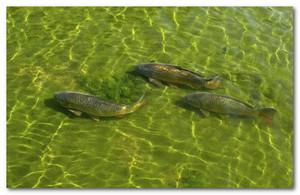 разведение рыбы как бизнес