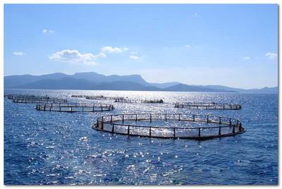 садки для выращивания рыбы