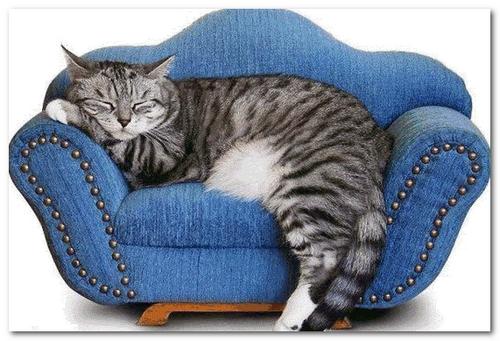 диван для кошек