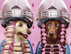 парикмахерская для животных