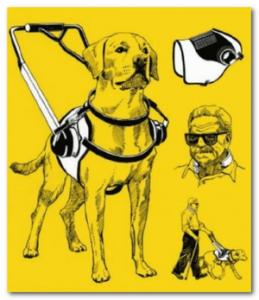 собака поводырь
