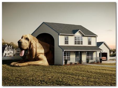 хостелы для животных