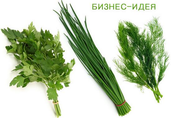 Выращиваем зелень на продажу