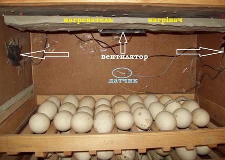 как сделать инкубатор