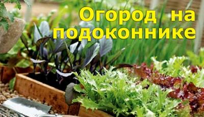 Огород на вашем подоконнике