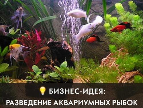 аквариумные рыбки как идея для бизнеса