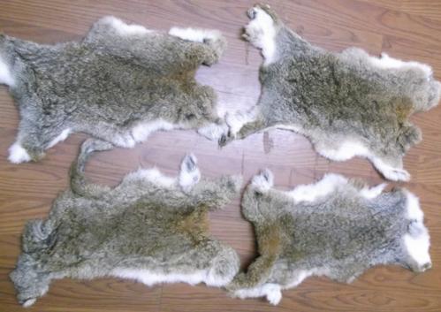 Как выделать шкурку зайца в домашних условиях видео