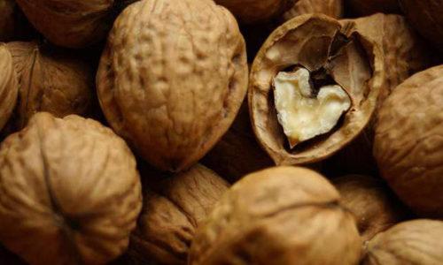 Бизнес по переработке грецких орехов
