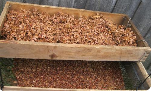 Переработка кедровых орехов