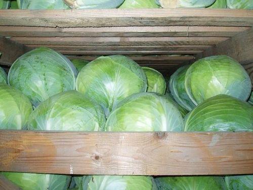 помещение для хранения капусты
