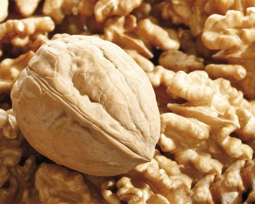Бизнес на переработке грецкого ореха