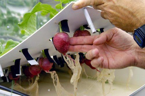 Выращивание овощей на гидропонике