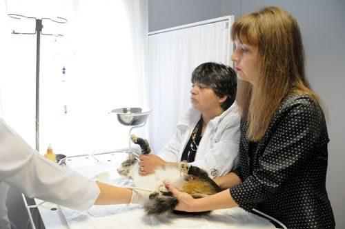 Персонал ветеринарной клиники
