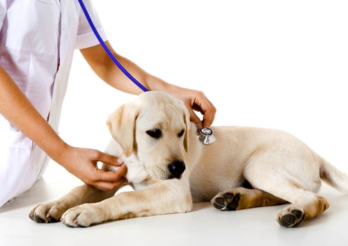 Бизнес ветеринарная клиника
