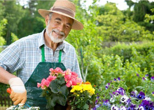 Садовник в теплице