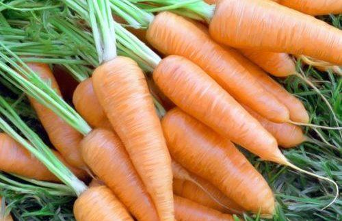 Бизнес на выращивании моркови