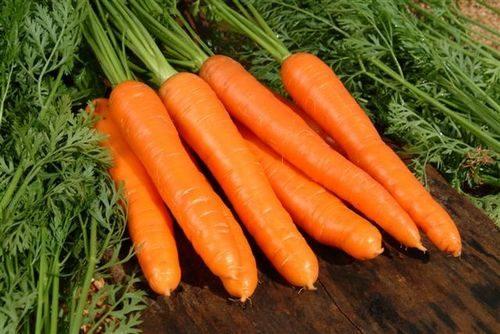 бизнес-план по выращиванию моркови