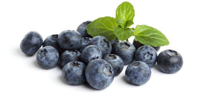 blueberries1 e1492005815470 - Бизнес-идея - выращивание черники