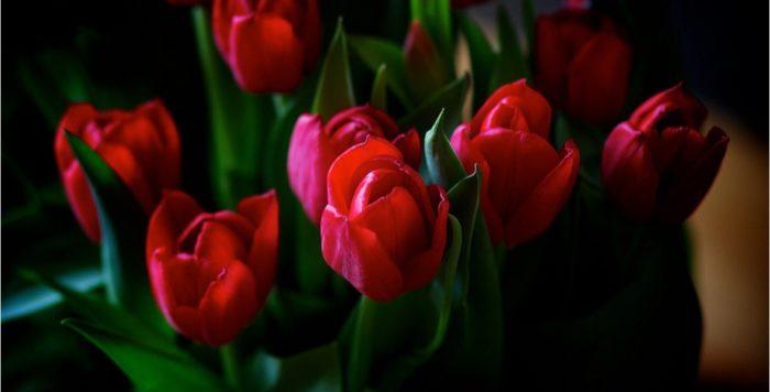 flowers 10367761920 rrwrkc.1180x600 e1493712105827 - Бизнес идея - автомат по продаже живых цветов