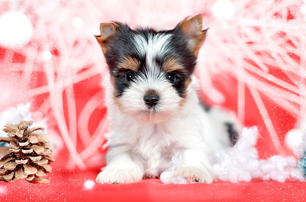 image 1 - Бизнес идея - разведение породистых собак
