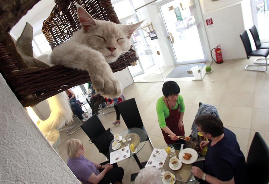 6 - Кафе с котами