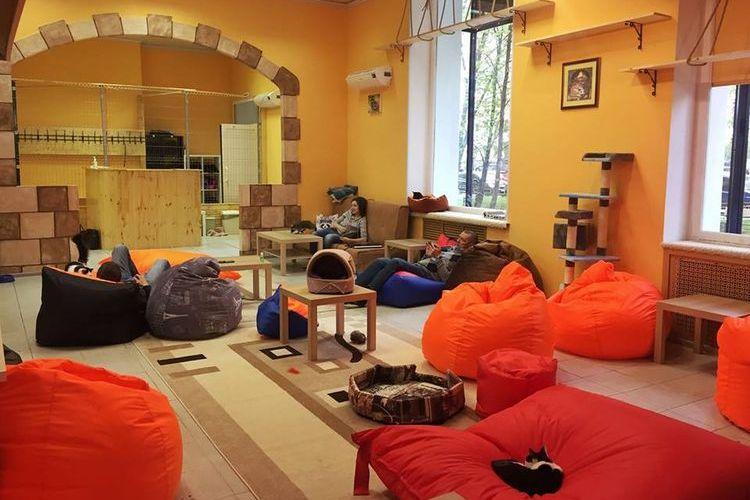 kafe s koshkami v moskve i sankt peterburge adresa - Кафе с котами