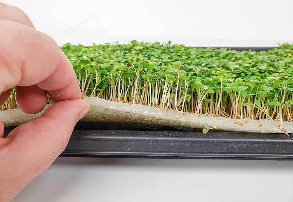 Преимущества бизнеса по выращиванию зелени