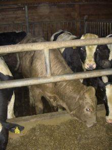 10762957molferm1 - Бизнес план молочной фермы