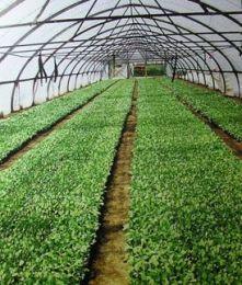 11770627611 - Бизнес план фермерского хозяйства