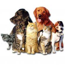17213787cyrillos pet shop11 96614 - Бизнес план зоомагазина