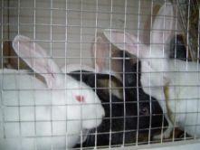 4637942912030986502224 - Бизнес план кролиководства
