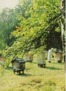 493726701114 - Бизнес план пчеловодства